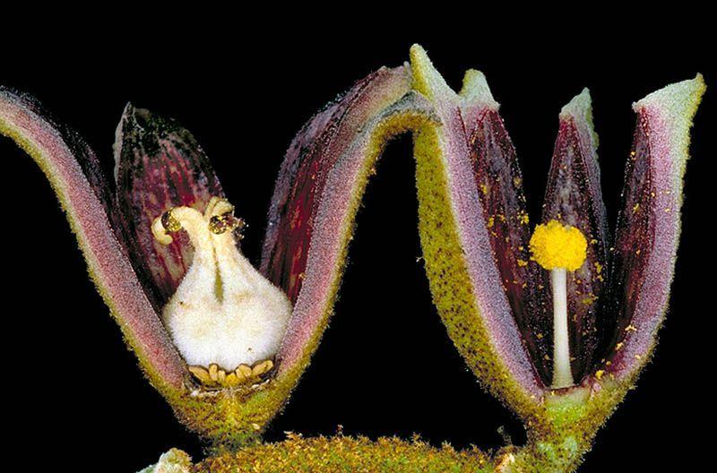 Unisexual flowers examples